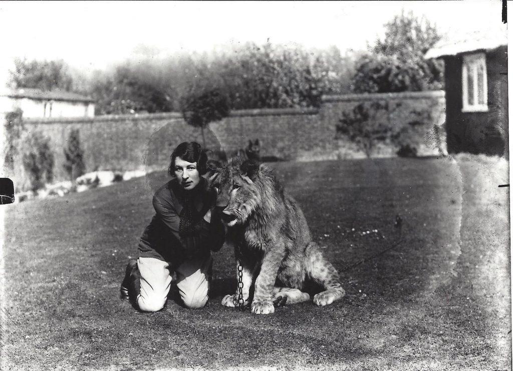 Letcombe Lion 2