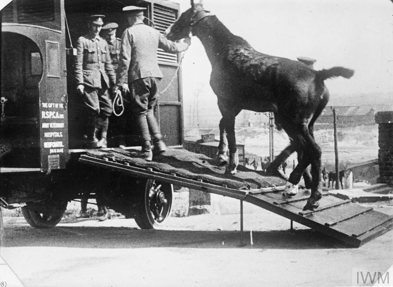 Real War Horse
